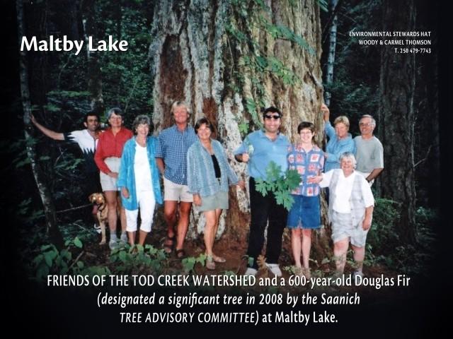 ENAC Maltby Lake - 600 yr old Doug Fir